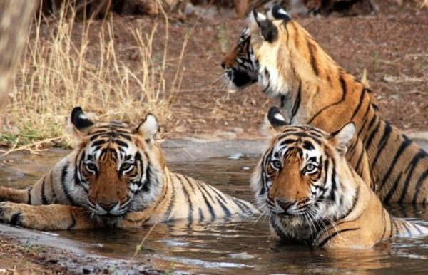 Mukunda Tiger reserve