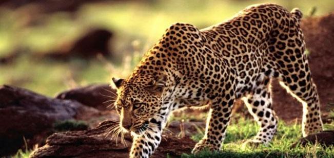 Darrah Wildlife Sanctuary