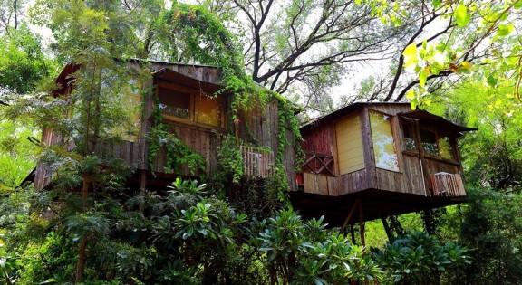 best resorts in Delhi[The treehouse resort]